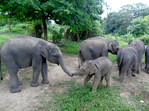 Elephants Animal Animals Calf: 3 Rescued Elephant Calves Get A New Lease On Life Thanks